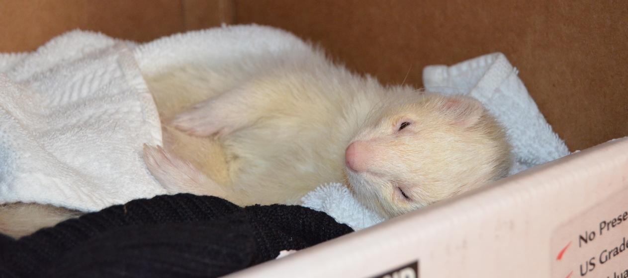 Sleeping-Shiro
