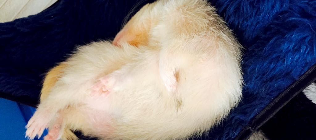 sleeping-ball-shiro